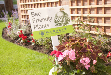 Builder's boost for bees at Hertfordshire developments