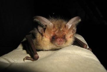 New license for bat mitigation to speed development process