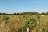 Kier Living to mitigate carbon usage through woodland creation