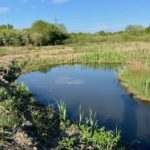 Scheme set to protect crested newts in South Yorkshire