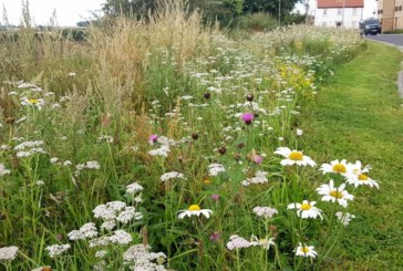 Meadfleet wins Biodiversity Award for Open Space Management